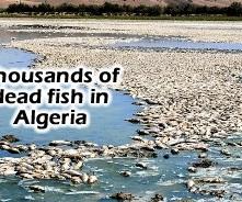 dead-fish-algeria