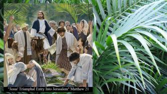 jesus-triumphal-entry-into-jerusalem-matthew-21